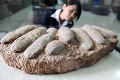 Dinosaur Egg-Stealing Spree Leads to Arrests in China | artnet News