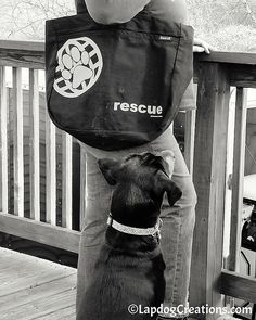 Penny and I are smitten with the RESCUE tote bag from #PawZaar #rescueddogs #adoptdontshop #giftsthatgiveback #LapdogCreations ©LapdogCreationshttp://bit.ly/1V3KVvD #ad