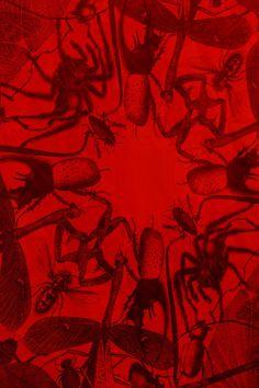 rosone n.3 | insecta detail ~ carnovsky