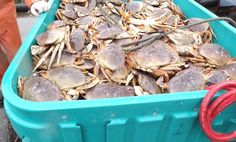 Oregon Dungeness Crab Sold at Northwest Wild Products in Astoria Oregon