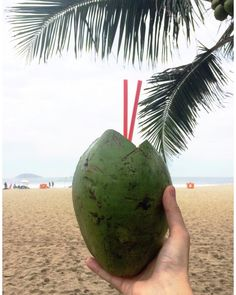 It doesn't get more tropical than this on a Monday! #aguadecoco #thatsaleaftravels #riodejaneiro
