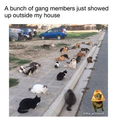 Cat gang runs this side of town now.   Follow mah cat @catnamedpizza  Meme @the_pizzacat 🍕there is only one pizzacat. #pizza #cat #cats #catsofinstagram #pizzacat  #pugmob #funny #funnymemes  #pizzacats #trippy #meme  #memes #bayarea #oakland  #spacecats #pizzacatapp #dafuq  #dogsofig  #pugs  #kawaii  #caturday #dankmemes #tacos #internet #pizzaparty #famouscat 😺🍕 SEND ME FUNNY PICS AND ILL TAG U
