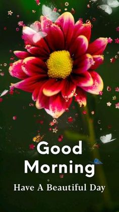 Good Morning Flowers Pictures, Good Morning Beautiful Pictures, Good Night Flowers, Good Morning Roses, Good Morning Image Quotes, Good Morning Cards, Good Morning Beautiful Quotes, Good Morning Photos, Good Morning Gif
