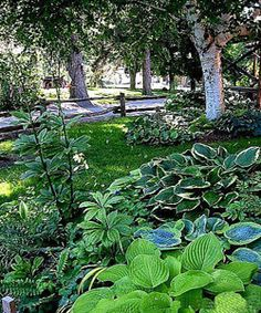 shade garden... plus good tips on improving shade garden soil.