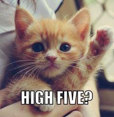 TOP 42 Funny Cats Pics