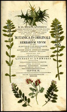Economic Botany Gray Herbarium Arnold Arboretum Farlow Cryptogamic Botany, Harvard University Hops Humulus Botanical Illustration