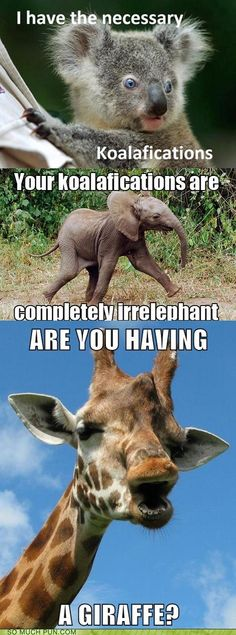 Your koalafications are completely irrelephant...lol