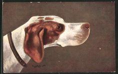 alte Künstler-AK Pointer, Jagdhund mit Halsband 1909