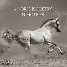 A horse is poetry in motion. Forms Of Poetry, Equestrian Quotes, Inspirational Poems, Horses And Dogs, Horse Quotes, Trail Riding, Pretty Horses, My Ride, Horseback Riding
