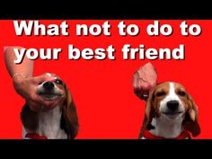 What not to do to your best friend and why, dog training  - this should really be mandatory viewing for anyone trying to train their puppy / dog