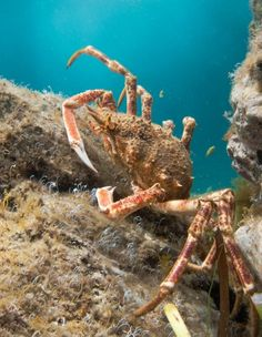 Freediving for Crabs in Cornwall – Preparation and Equipment List