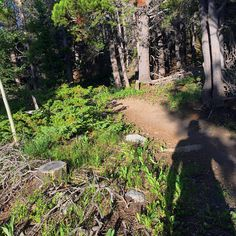 Trail running with Freddie Kruger's shadow. Run, Forrest, run!