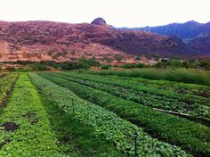 Organic farming in UAE