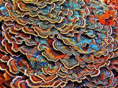 Elinor Teele: photographer | Polypore Mushrooms in the New England Woods | Gloucester, Massachusetts, U.S.A. | 2011