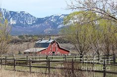 This scenic old red barn on what my family has known as the Sims' place for four generations is on the place adjacent to my parent's where I was raised between Hotchkiss and Paonia, Colorado. It is one of the vintage structures in our area that hasn't changed much thanks to the various owners who have kept it well maintained. While growing up I rode my horse past this barn countless times on my way to BLM land.  Therefore, it is a very special historical structure to me.