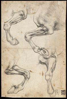 Leonardo Da Vinci Studies of Horse's Leg
