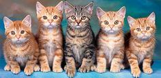 Cuidados de gatos y gatitos