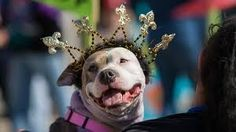 MSAH offers training tips to ensure you and your dog can have a safe and good time this Mardi Gras season. #msah101 #dogs #MardiGras #nola