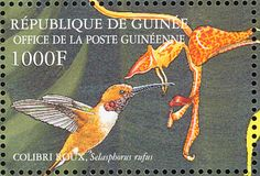 Rufous Hummingbird stamps - mainly images - gallery format