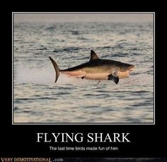 ontologicalterrorist: lucyphermann: allcreatures: A Great White shark jumps out of the water as it hunts Cape fur seals near False Bay, South Africa Picture: AFP/GETTY (via Pictures of the day: 6 July 2010 - Telegraph) Art Jokes, Funny Jokes, Huge Shark, Cool Pictures, Funny Pictures, Funny Pics, Funny Captions, Animal Pictures, Sea Turtles