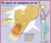 De quoi se compose un os ? - Le Petit Quotidien, le seul site d'information quotidienne pour les 6-10 ans !
