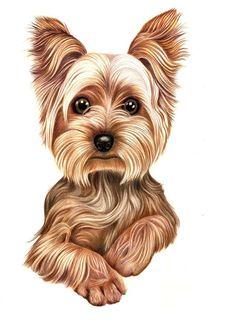 Výsledek obrázku pro how to draw yorkshire terriers step by step