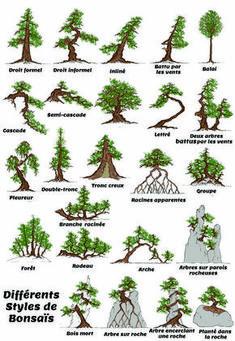 styles de bonsais