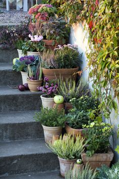 potted herbs and plants for side garden, so pretty, stair plantings
