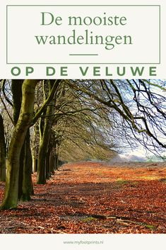 Hello Summer, Netherlands, Country Roads, Europe, Places, Travel, Outdoor, The Nederlands, Outdoors