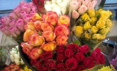 úžasné kytice růží (84 pieces)