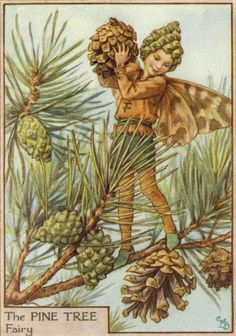 Pine Tree Flower Fairy Vintage Print by Cicely Mary Barker, first published in London by Blackie, 1940 in Flower Fairies of the Trees. Cicely Mary Barker, Tree Illustration, Fantasy Illustration, Flower Fairies, Kobold, Winter Fairy, Vintage Fairies, Fairy Art, Faeries