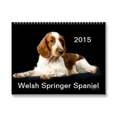Welsh Springer Spaniel 2015 Calendar | Zazzle