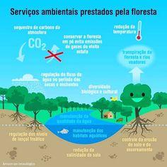 Os serviços ecossistêmicos ou ambientais são os benefícios que a natureza nos proporciona de maneira direta e indireta. Isso alerta para a necessidade e importância da preservação dos ecossistemas. Façamos a nossa parte! Compartilhe esta ideia! 🌿🐝🌎 #preserve #conservacao #preservacao #mataatlantica #caatinga #cerrado #mangue #araucaria #amazonia #bioma #vida #verde #fauna #flora #dominio #bio #interdependencia #ciclo