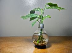 light bulb meets vase   ...and more light bulb crafts