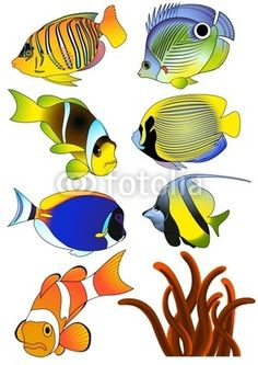 Bring the ocean into your bedroom, school or office space with tropical fish, dolphins, sharks, & more! Fish Drawings, Animal Drawings, Ocean Drawing, Wallpaper Earth, Drawn Fish, Reptiles, Drawing Tutorials For Beginners, Exotic Fish, Fish Art
