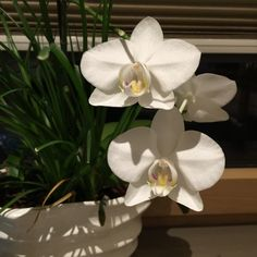 Mis orquídeas Plants, Flowers, Plant, Planting, Planets