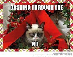 Favorite Grumpy Cat picture