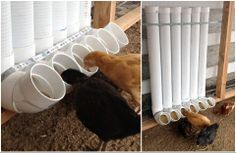 """Brilliant way to feed chickens.  Found this on the facebook page of Kathleen Heaton. She wrote, """"To clean, fill it up with water and bleach let it sit then pull the caps off and flush water down ,let dry then refill."""""""