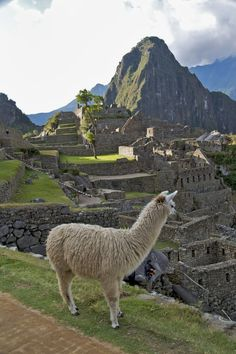 Machu Picchu, Peru. Pinned it because of the Llama being awesome and all ^^, but I do wanna go there.