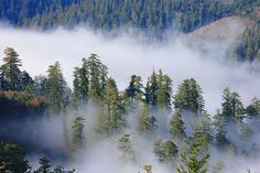 Redwood National Park - great guide to Redwood hikes!
