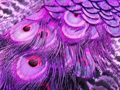 ☮ American Hippie ☮ Purple Peacock Feathers