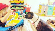 Willow is taking care of her pup. . #toddlersofinstagram #pitbullsofinstagram #toddler #picoftheday #toddlermom #toddlerfun #girlandherdog #dogsofinstgram #pitbull #pit #pitbulls #dog #dog #bullyinstagram #bully #bully