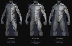 Muscle guide by Body Type | The Art of Rafael Grassetti via PinCG.com