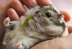 Omnomnom...... Too cuteeee! <3