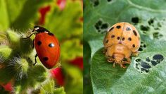Good bug, bad bug: How can you tell the difference? | MNN - Mother Nature Network