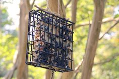 How to Select the Perfect Bird Feeder >> http://blog.diynetwork.com/maderemade/2015/07/15/favorite-tweets-how-to-select-a-bird-feeder/?soc=pinterest