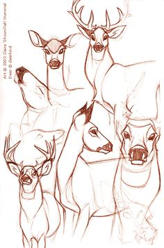 Deer studies by *shoomlah on deviantART