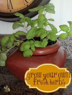 Grow your own fresh herbs!  The secret is in the pot!