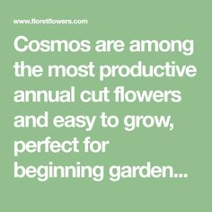 Cosmos are among the most productive annual cut flowers and easy to grow, perfect for beginning gardeners. Seed can be started indoors or direct sown. Flower Gardening, Garden Plants, Planting Flowers, Veggie Patch, Outdoor Crafts, Planting Seeds, Cut Flowers, Garden Inspiration, Cosmos