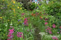 Pstruhový potůček lemují výsadby vlhkomilných trvalek, patrových petrklíčů, kapradin a trav, nad kterými nádherně voní žluté květy azalky (Rhododendron luteum).